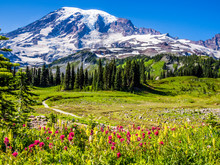 Wildflowers At Mount Rainier N...