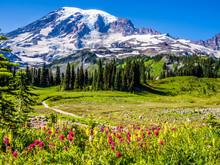 Wildflowers At Mount Rainier National Park