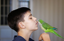 Close-up Portrait Of Teenager Boy Holding And Kissing His Green Monk Parakeet Or Quaker Parrot In Front Of His Face. Bird Pet And His Owner. Love And Care, Best Friends.
