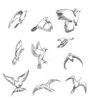 Hand Drawn Vector Set Birds Variety Of Vintage Bird Illustrations