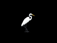Adult Snowy Egret Cut Out
