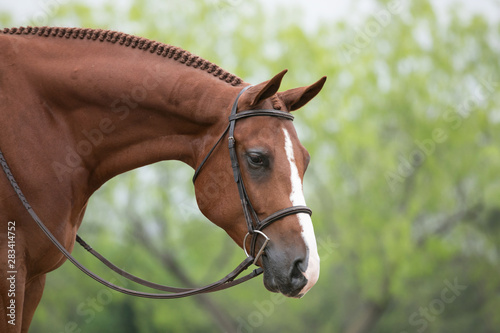 Fototapeta Hunter Horse obraz