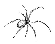 Sketch Of Spider. Hand Drawn Illustration Converted To Vector