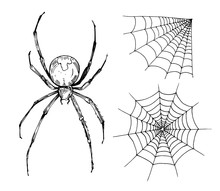 Sketch Of Spider Web. Hand Dra...