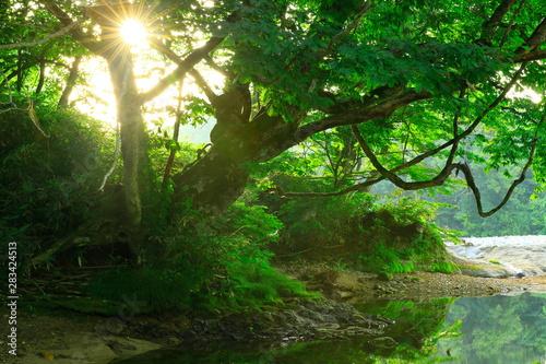 Fototapeta 岩手県西和賀町 夏の弁天島 obraz na płótnie