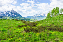 Crested Butte, Colorado Mountain View On Snodgrass Hiking Trail In Summer In Rocky Mountains With Yellow Marsh Marigold Or Shrubby Cinquefoil Flowers Meadow