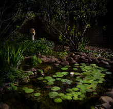 Backyard Pond At Night, With Blooming Fragrant North American White Water Lily (Nympha Odoranta).