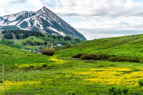 Mount Crested Butte, Colorado mountain point peak view on Snodgrass trail in summer with field meadow of buttercup yellow flowers