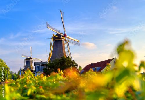 Foto auf AluDibond Rotterdam Historic windmills located in Kralingen Lake in Rotterdam, the Netherlands.