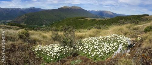 Photo panoramic view of Saint Arnaud range in Nelson Lakes National Park, New Zealand
