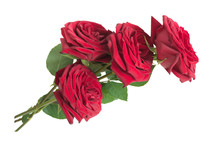 Four Red Roses Isolated On Whi...