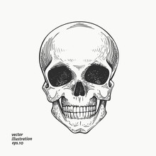 Human Scull Illustration. Hand Drawn Vector Skeleton Illustration. Engraved Style. Vintage Halloween Illustration.