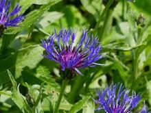 Fleur Minimaliste