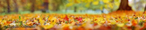 Fotografia  trees with multicolored leaves on the grass in the park