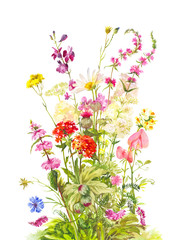 Bouquet of forest flowering plants. Wild field flowers. Watercolor illustration isolated