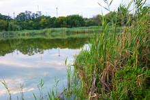Small Natural Lake Pishchevoye...