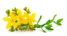 St John's Wort, Yellow Blossom Of Tutsan Bush, Herbal Medicinal.