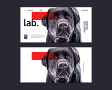 DOG Flyer Template With Photog...