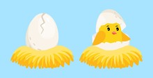 Newborn Chick. Cartoon Egg And Hatched Chick With Eggshell On Head In The Nest Vector Illustration. Eggshell Chick In Nest, Newborn Baby Bird