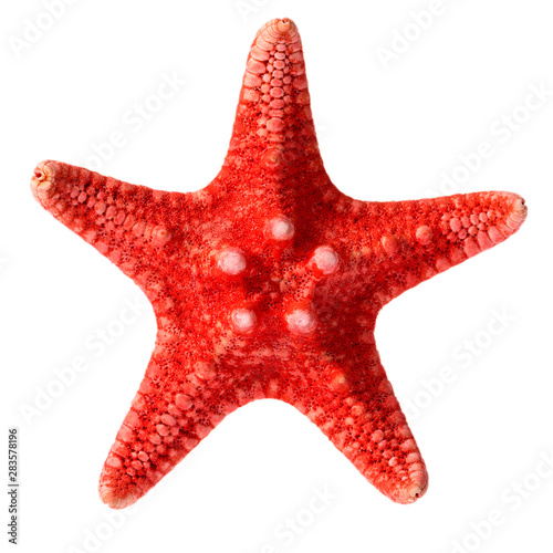 Cuadros en Lienzo Dried red sea star isolated on white background, close up