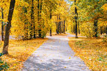 Footpath In The Autumn Park Wi...