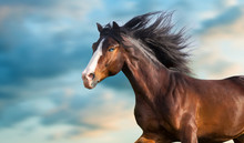 Horse Portrait With Long Mane Close Up In Motion
