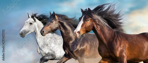 Foto Horse portrait with long mane close up in motion