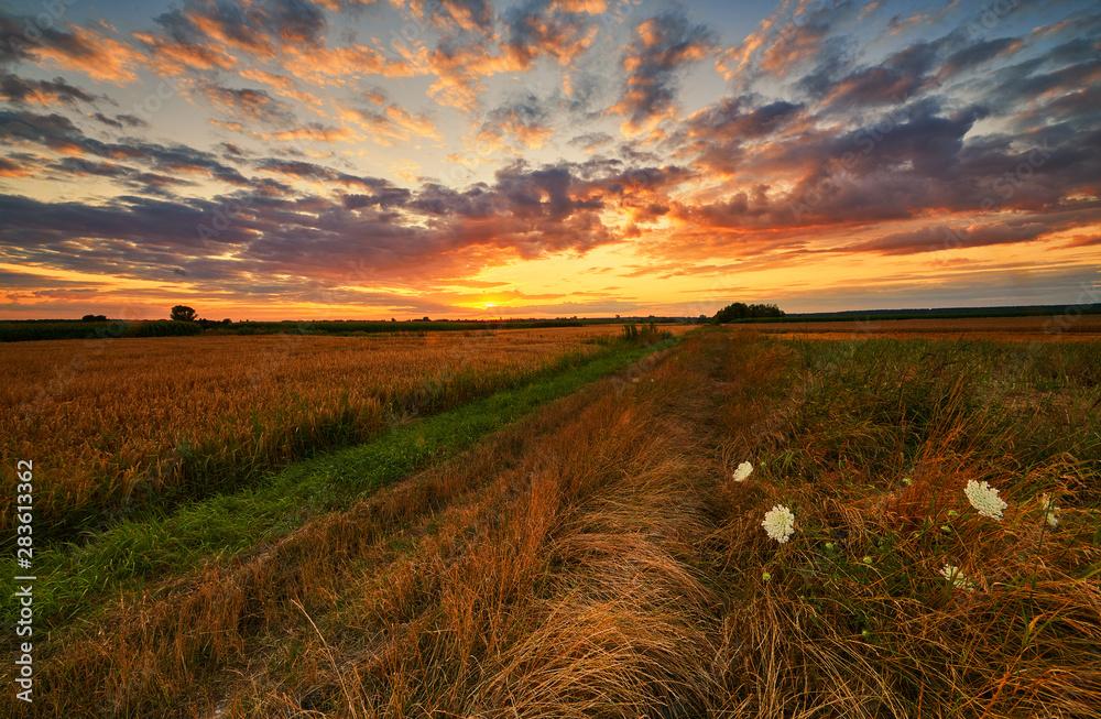Fototapeta Beautiul summer landscape over fields