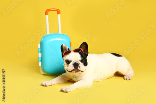 Leinwand Poster  French bulldog with little suitcase on yellow background