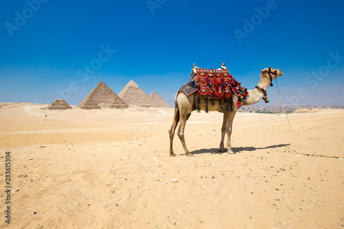 Foto op Plexiglas Kameel pyramids with a beautiful sky of Giza in Cairo, Egypt.