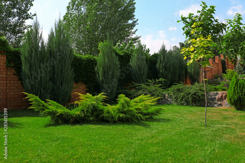 Obraz Beautiful green garden with different plants on sunny day - fototapety do salonu