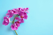 Leinwandbild Motiv Orchid branch with beautiful flowers on light blue background, top view. Space for text