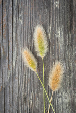 Wild Grasses Arranged On Wood Surface