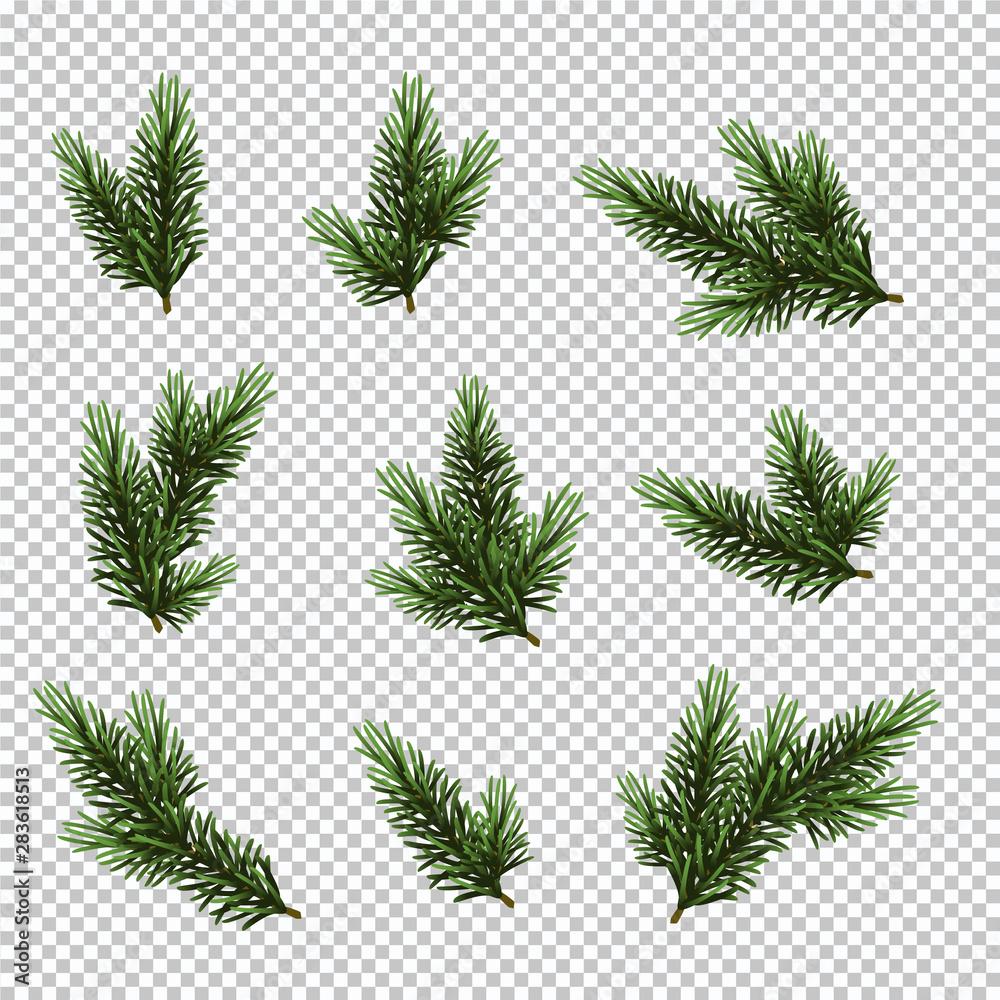 Fototapeta Set Christmas tree isolated on white background, pine fir branches.