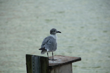 Seagull Standing On A Wooden Box