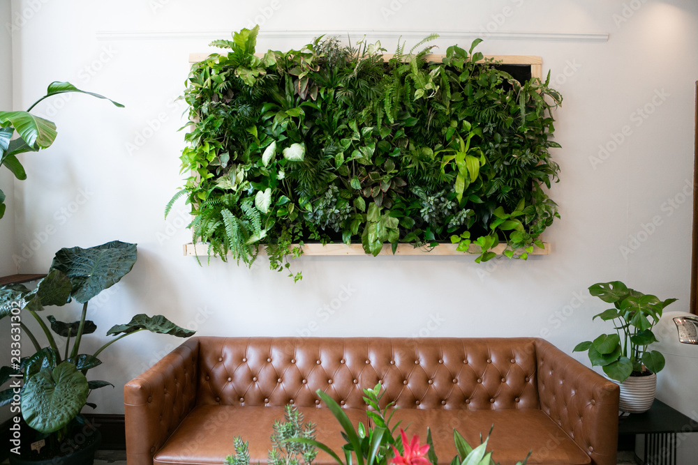 Fototapety, obrazy: Floating plants on wall over brown leather couch, vertical garden indoors