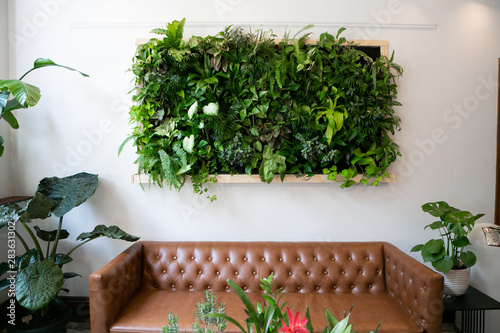 Obraz Floating plants on wall over brown leather couch, vertical garden indoors - fototapety do salonu