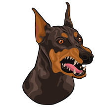 Head Of A Barking Doberman Iso...