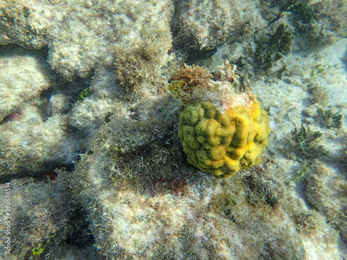 Photo Coral reef in the ocean.