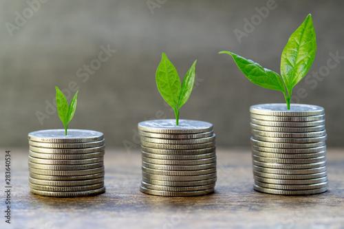 Cuadros en Lienzo Growing plants on coin stacks