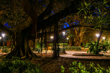 Syracuse, Sicily, Italy The Garden Of Arethusa, A Legendary Fountain On Ortygia Island.