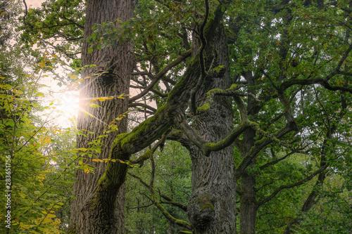 Fototapeta Białowieski Park Narodowy obraz