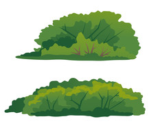 Set Of Two Green Bushes, Thick Green Shrub With Branches, Elements Of Undergrowth Vegetation
