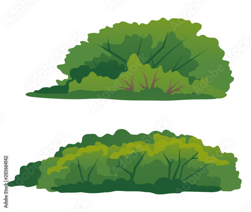 Set of two green bushes, thick green shrub with branches, elements of undergrowt Wallpaper Mural