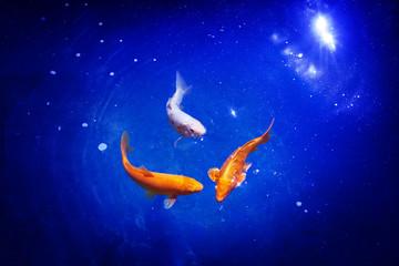 Obraz na płótnie Canvas Three orange and white koi carp fishes closeup, navy blue sea background, goldfish swims in pond, night moonlight glow shiny stars, artistic galaxy fantasy illustration, constellation sign, copy space