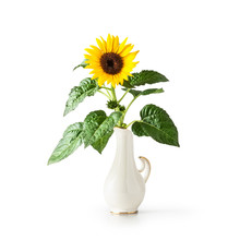 Sunflower In Vintage Vase