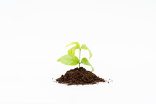 Sprout And Organic Soil On Whi...
