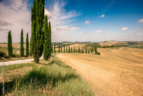 Beautiful landscape scenery of Tuscany in Italy - cypress trees along white road Fotobehang