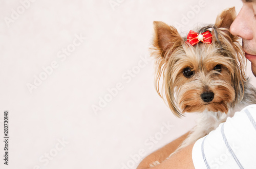Obraz Young man playing with puppy yorkshire terrier - fototapety do salonu