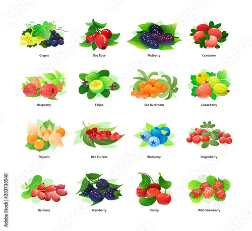 Forest berry and fruit plant vector illustration Wall mural